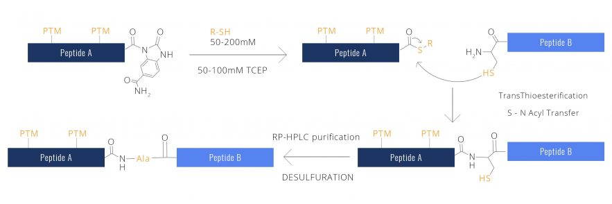 Peptide Discovery - Chemical synthesis of complex peptides and proteins