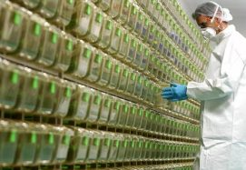 """The Italian Company: """"Vaccine, We're Ready For Clinical Trial With Oxford"""""""