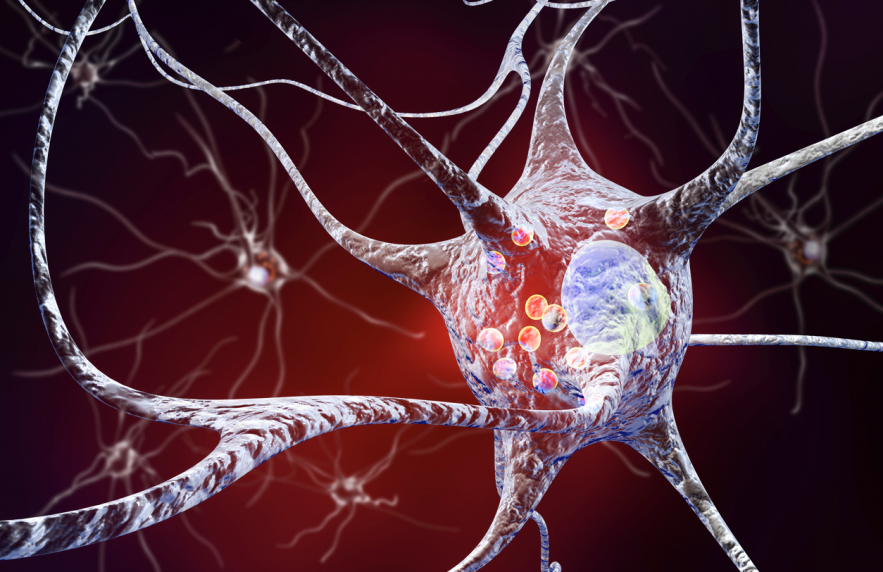 IRBM Contribution To Frontiers In Neuroscience