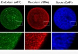 IRBM's Publishes In Cells On Establishing A Human Blood-brain Barrier Model For Use In Drug Discovery For Neurodegenerative Diseases Such As Huntington's