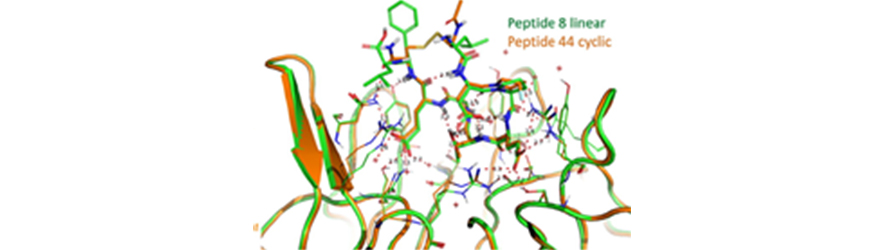 IRBM & Collaborators Publish On Techniques For Characterizing Peptides In Type 2 Diabetes And A Peptide Drug Discovery Program For Huntington's Disease