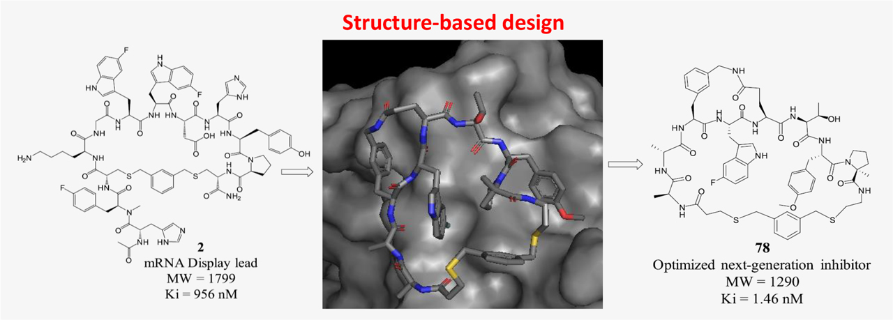 Series of Novel and Highly Potent Cyclic Peptide PCSK9 Inhibitors Derived from an mRNA Display Screen and Optimized via Structure-Based Design